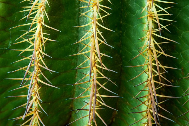 detail kaktusu