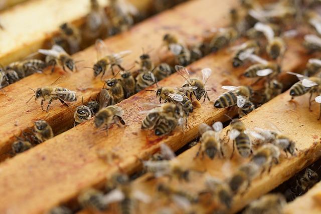 včely u úlu