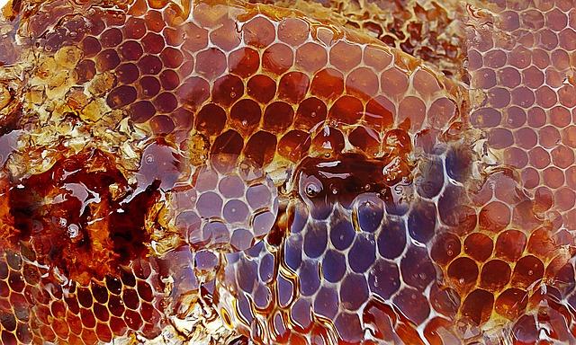 včelí med